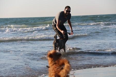 מאלף כלבים בכיר ומטפל בבעיות התנהגות של כלבים, מדריך בקורסי אילוף בגישה חיובית