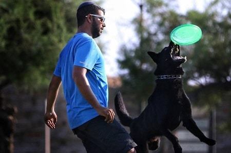 תמונה של אביחי עוזר מדריך קורס מאלפי כלבים