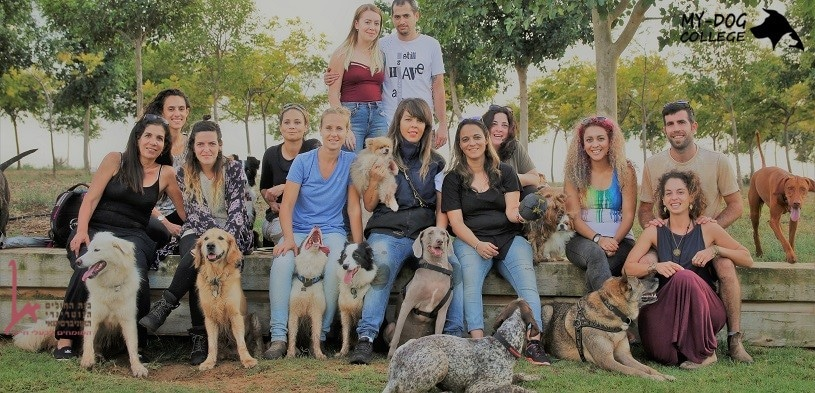 סטודנטים בקורס לומדים לשלב אהבה לכלבים וטיפול בבני אדם