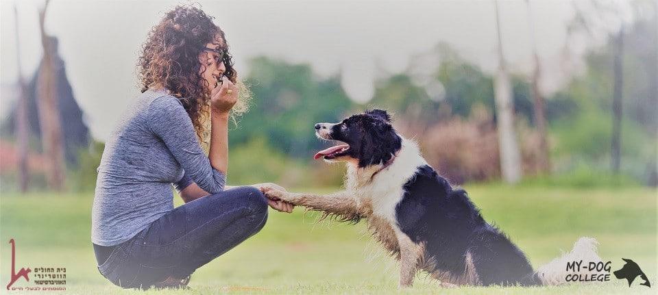 בבסיס שיעור אילוף עומדת תקשורת נכונה עם הכלב