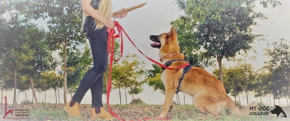 מאי דוג קולג' אילוף כלבים כלב תופס מקל בפארק