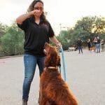 מדריכה בכירה מאיה פרנקו עם כלב, שיעור אילוף כלבים