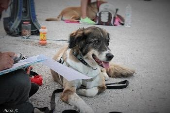 סטודנטית וכלב בשיעור אילוף כלבים מאי דוג קולג'