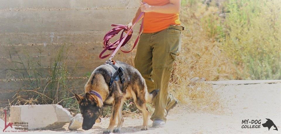 כלב לאיתור חפצים חשודים, נעלמים או איתור עם מאלפת