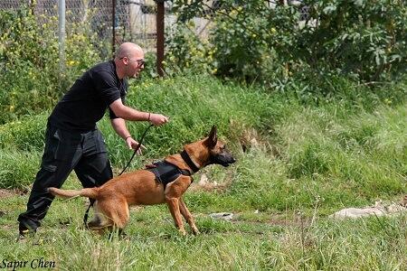 כלב שמירה בשיעור אילוף בטבע עם מאלף כלבים